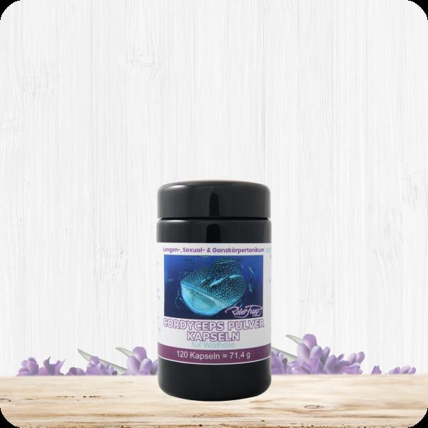 Cordyceps Pulver Kapseln für Walhaie - 120 Kapseln